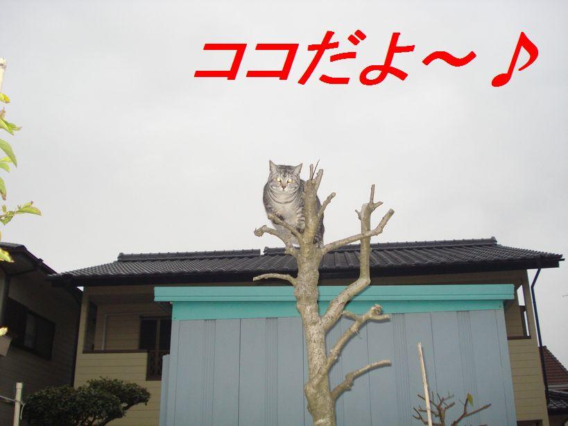 Dsc06769