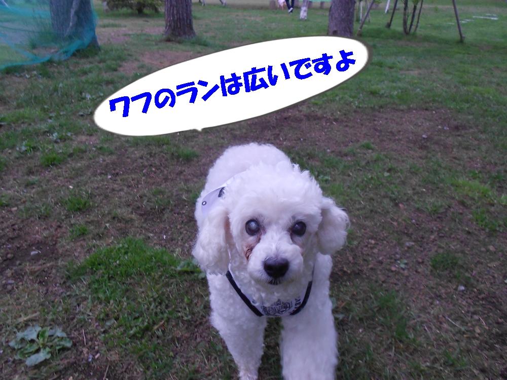 Dscn2460_2